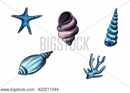 Hand Drawn Watercolor Illustration Of Different Seashells