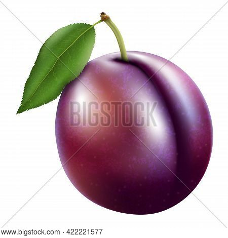 Plum With Stem And Green Leaf With Shadow. Vector 3d Realistic Illustration, Isolated On White Backg