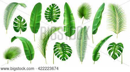 Exotic Flora And Vegetation Of Rainforests And Jungles, Isolated Tropical Leaves. Set Of Banana And