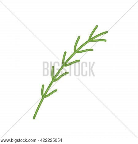Sprig Of Fresh Rosemary, Fragrant Herbs For Cooking, Vector Clipart In Flat Style, Isolate On White