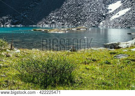 Colorful Green Scenery With Wild Flora Near Mountain Lake. Beautiful Scenic Landscape With Sunny Gli