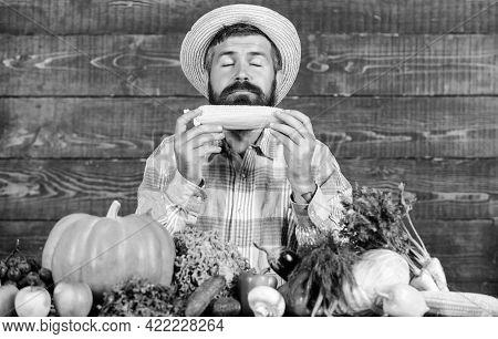 Homegrown Organic Harvest Benefits. Farmer Hold Corncob Or Maize Wooden Background. Farmer Presentin