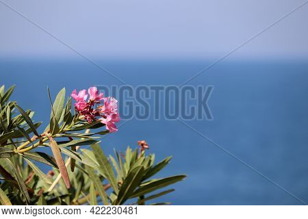 Sea Vacation, Oleander Flowers On Blue Water Background. Leisure And Relax On A Paradise Beach