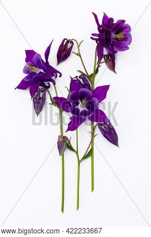 Bouquet Of Bright Spring Blue And Purple Flowers Close Up Isolated On White Background. Closeup View