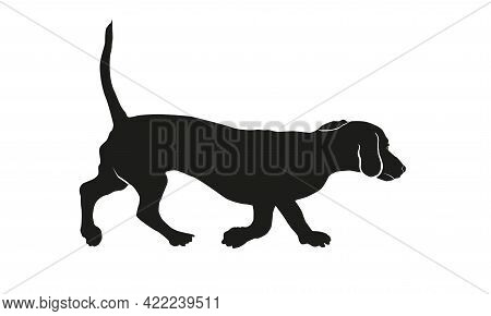 Running Dachshund Puppy. Black Dog Silhouette. Wiener Dog Or Sausage Dog. Pet Animals. Isolated On A