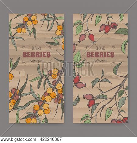 Set Of Two Labels With Dog Rose And Common Sea Buckthorn Branch Color Sketch. Berry Fruits Series.