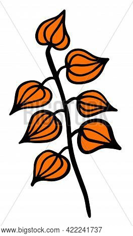 Physalis. Seven Isolated Vector Floral Elements For Design On A White Background.