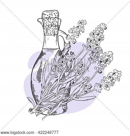 Sprig Lavender Hand Drawn Sketch. Bottle With Lavender Essential Oil. Cosmetic, Perfumery And Medica