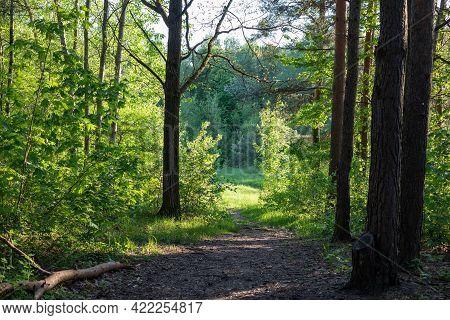 Picturesque Forest Around The Seskines Os (seskines Ozas), Glacial Period  Gravel Ridge In Vilnius,