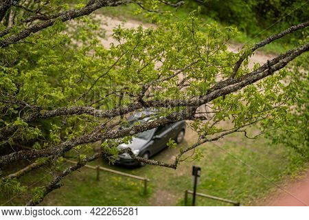 The Car Is Bitten Through Trees, The Car Is Blurred, From Above