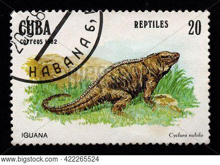 Cuba - Circa 1982: Cuban Postage Stamp Featuring Iguana. Cyclura Nubila On Postage Stamp. Vintage St