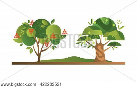 Set Of Fruit Trees With Ripe Fruits, Rowan And Olive Orchard Tree Flat Vector Illustration