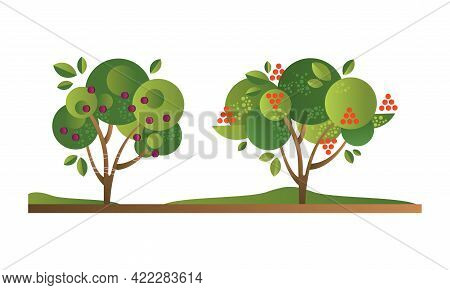 Set Of Fruit Trees With Ripe Fruits, Cherry Orchard Tree Flat Vector Illustration