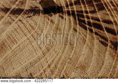 Wood Abstract Texture. Surface Grunge Backdrop. Dirty Wooden Effect Pattern. Material Background. Gr