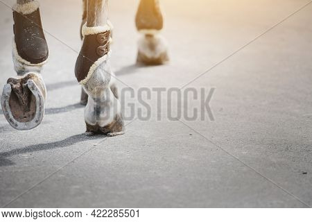 Feet Running Sports Gray Horse. Legs Of A Sporting Savvy Horse In Knee-caps. A Horseshoe On A Horse'