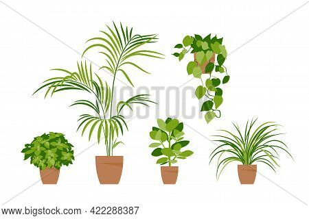 Collection Home Plants. Potted Plants Isolated On White. Vector Set Green Plants. Trendy Home Decor