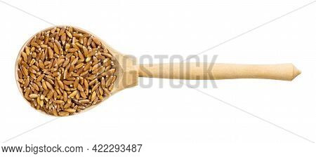 Top View Of Wood Spoon With Uncooked Emmer Farro Hulled Wheat Grains Isolated On White Background