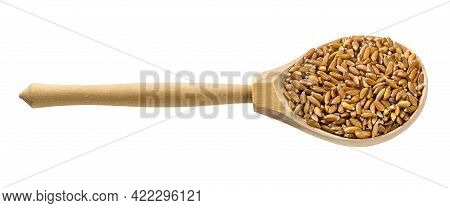 Wooden Spoon With Uncooked Emmer Farro Hulled Wheat Grains Isolated On White Background
