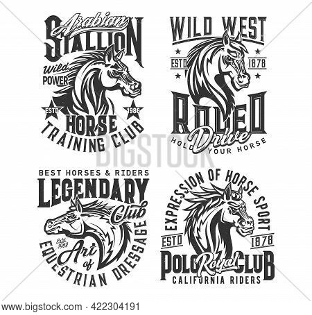 Stallion Horse And Wild Mustang Vector T-shirt Print Mockups. Equestrian Sport, Horse Race, Rodeo An