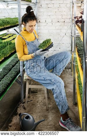 Young Female Farmer Growing Microgreens On Her Indoor Vertical Garden. Happy Woman Looking After Pla