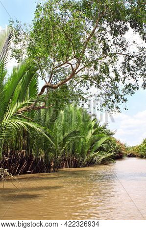 Mangrove tree and palm leaves in delta of Mekong river, Vietnam, Asia