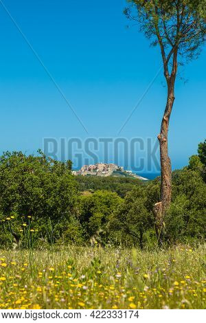 Early Morning Sun On The Citadel Of Calvi In The Balagne Region Of Corsica With Wild Flowers In The