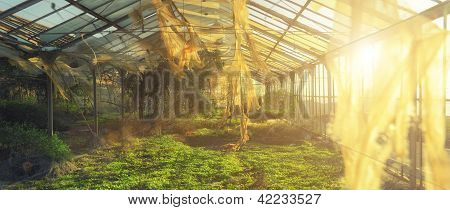 Ancient green house