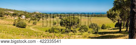 Panoramic View Over A Vineyard In The Balagne Region Of Corsica With The Citadel Of Calvi And Medite