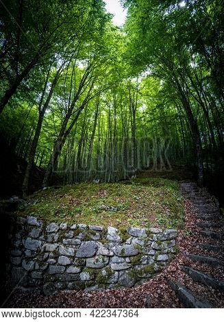 Spectacular Stone Steps Towards Beech Tree Forest