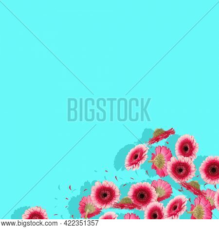 Trendy pink floral background with copy space above flowers. Abstract spring blue backdrop space. Festive natural concept