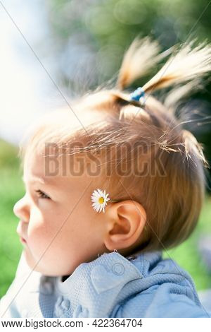 Little Girl With Two Ponytails And A Chamomile Behind Her Ear Looks To The Side. Portrait. Close-up