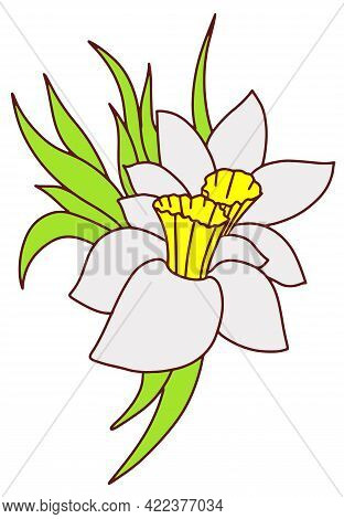Daffodil Boutonniere A Small Bouquet Of White Flowers. Doodle Style Line Hand Drawn . Vector Illustr