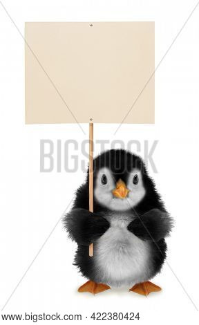 Cute little penguin baby with white banner isolated on white background. Funny animal concept photo
