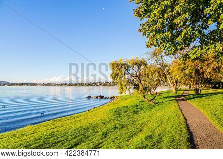 Taupo is the largest lake in New Zealand, North Island. Magnificent sprawling tree by the lake Taupo. Magnificent sunset. Quiet evening on the lake.