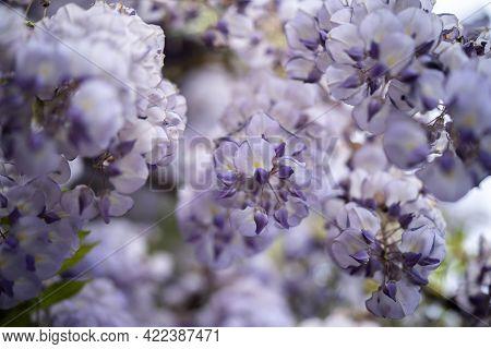 Incredibly Beautiful Purple Exotic Flowers, Incredible Wildlife