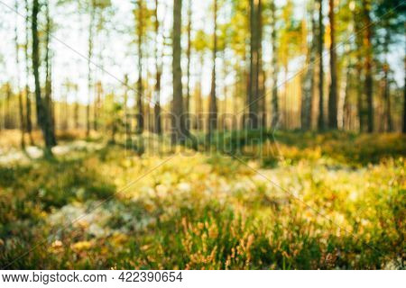 Nature Green Forest Natural Blurred Absract Background Of Out Of Focus. Bokeh, Boke With Sunlight Co