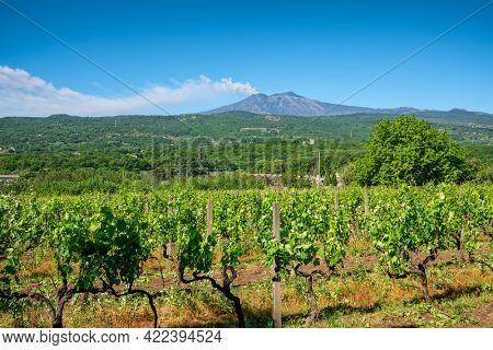 Sicilian vineyards with Etna volcano eruption at background in Sicily, Italy. Rural Sicilian landscape