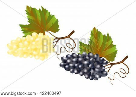 Fresh Ripe Juicy Sweet Grapes On A White Background. Blue And White Table Grapes 3d. Realistic Bunch