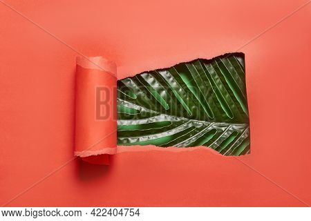 Torn And Rolled Piece Of Red Paper And Green Tropical Palm Leaf. Copy Space. Bright And Creative Bac