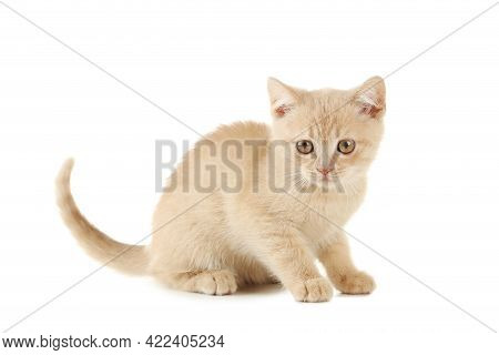Ginger Kitten Isolated On A White Cat Pictures, Cat Eyes, Pictures Of The Most Beautiful Cat, Cute C
