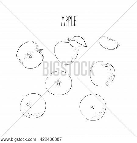 Vector Apples Hand Drawn Set . Sketch Vector Food Illustration. Vintage Style. Slice And Whole Fruit