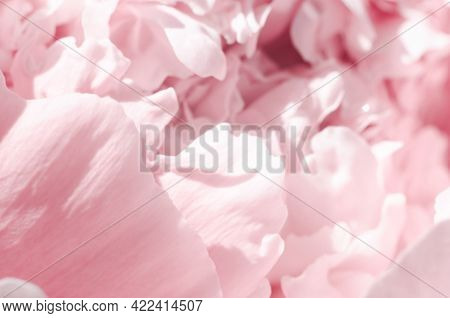 Beautiful Blurred Background Of Pink Peony Petals. Delicate Floral Card. Abstract Gentle Pink Backgr