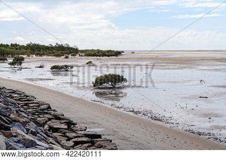 Mangrove Trees Visible At Low Tide On A Beach With A Rock Wall Shoreline