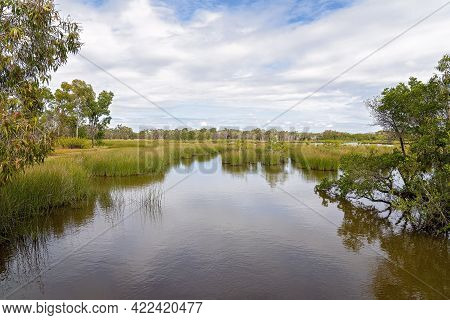 Wetlands Ecosystem Providing And Environment For Birds And Other Wildlife To Flourish