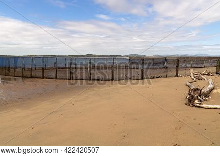 A Netted Swimming Enclosure On A Beach With The Tide Out And Fallen Trees Due To Wind Erosion Of The