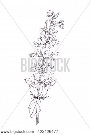 Blue Spring Flowers Bugle, Blue Bugle, Bugleherb, Bugleweed, Carpetweed, Carpet Bugleweed, Common Bu