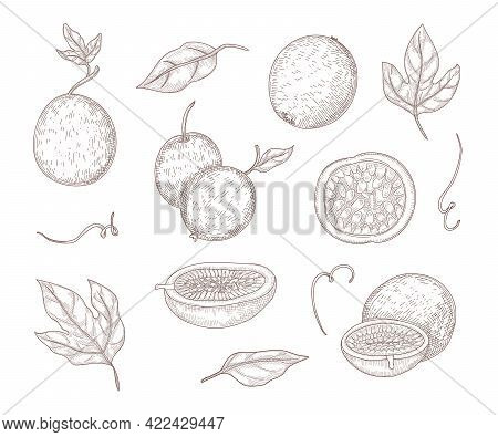 Fresh Passionfruit Engraved Illustrations Set. Hand Drawn Vintage Sketch Of Whole Passion Fruits And