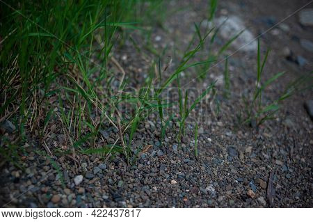 Pebbles And Colored Pebbles In Close-up. Texture Of Mixed Different Sizes Stones On The Shore Of The