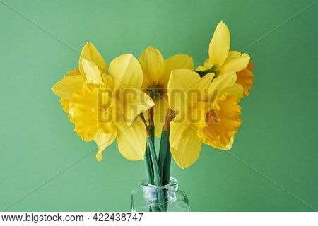 Bouquet Of Narcissus Flowers In Glass Vase On Green Background With Copy Space. Yellow Daffodils