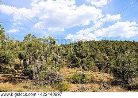 Pinyon Pine Trees Besides Joshua Trees On An Alpine Plateau Where Mountainous Terrain Meets The High